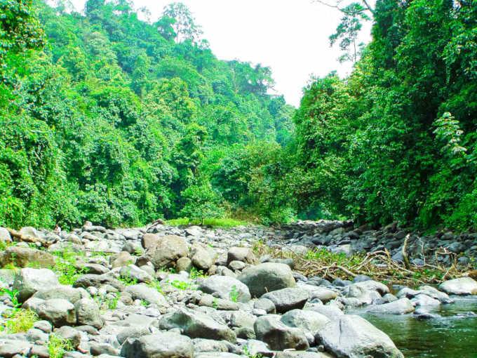 Rumbo-Malabo-Bosque
